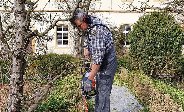 Gärtener schneidet Buchsbaumhecke